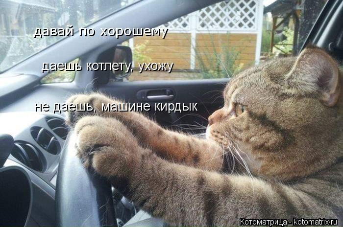 Котоматрица: давай по хорошему даешь котлету, ухожу не даешь, машине кирдык