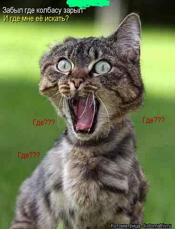 Котоматрица: Забыл где колбасу зарыл И где мне её искать? Где??? Где??? Где???