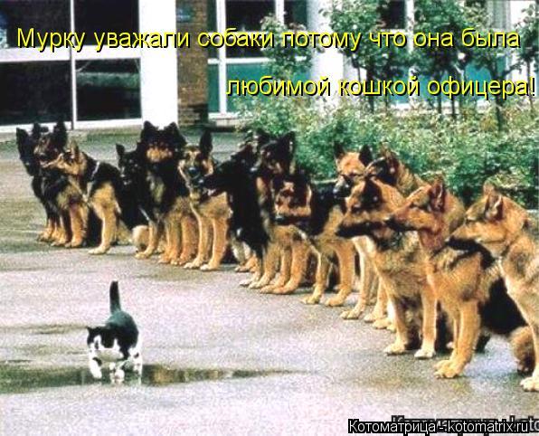 Котоматрица: Мурку уважали собаки потому что она была  любимой кошкой офицера!