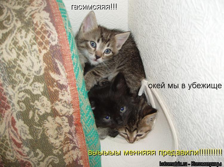 Котоматрица: гасимсяяя!!! окей мы в убежище выыыыы менняяя предавили!!!!!!!!!!