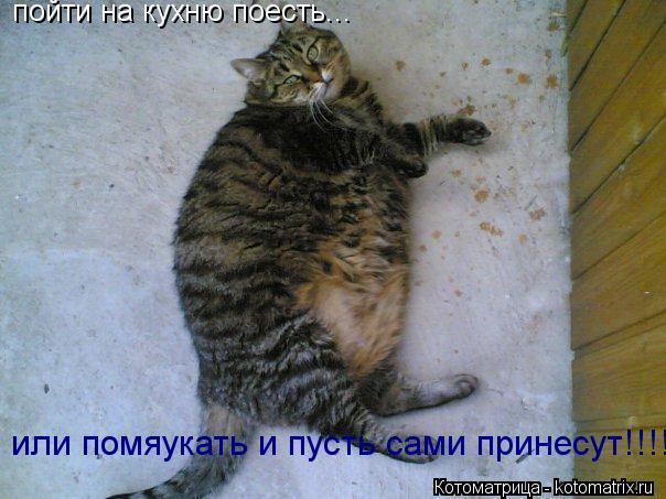 Котоматрица: пойти на кухню поесть... или помяукать и пусть сами принесут!!!!
