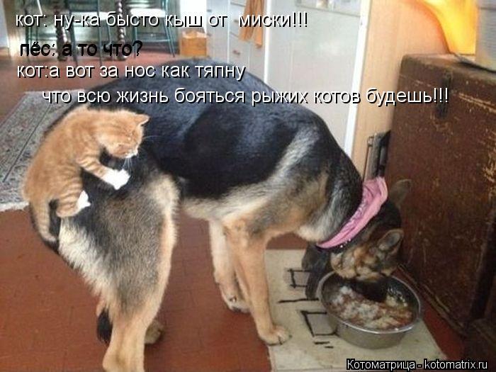 Котоматрица: кот: ну-ка бысто кыш от  миски!!! пёс: а то что? кот:а вот за нос как тяпну  что всю жизнь бояться рыжих котов будешь!!! пёс: а то что?