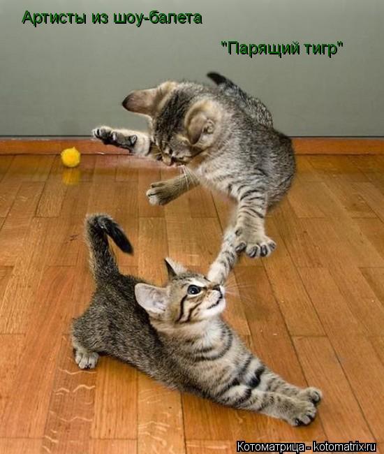 "Котоматрица: Артисты из шоу-балета ""Парящий тигр"""