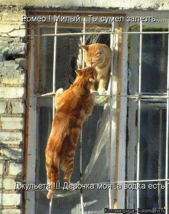 Котоматрица: Ромео ! Милый...Ты сумел залезть.... Джульета !!! Девочка моя ,а водка есть ????