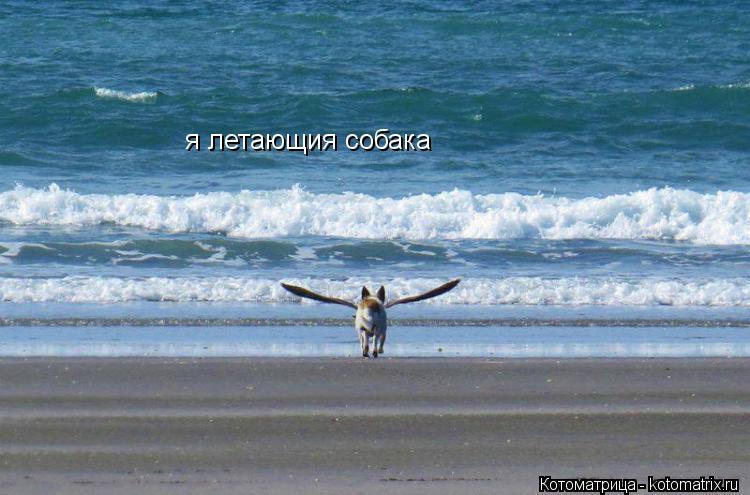 Котоматрица: я летающия собака
