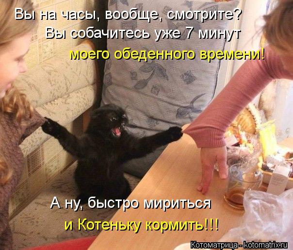 Котоматрица: Вы собачитесь уже 7 минут  моего обеденного времени! Вы на часы, вообще, смотрите? А ну, быстро мириться  и Котеньку кормить!!!