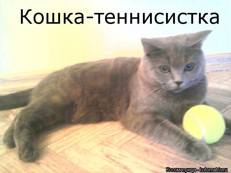 Котоматрица: Кошка-теннисистка