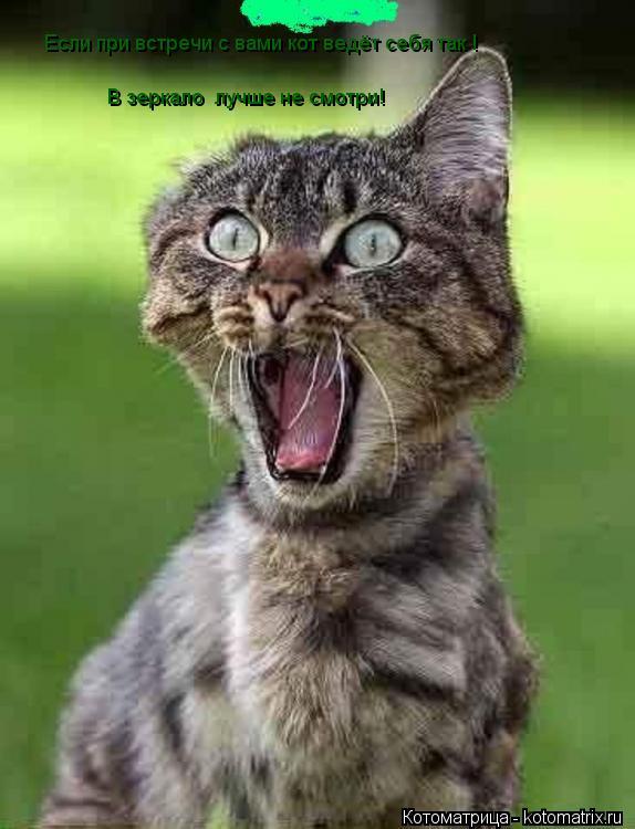 Котоматрица: Если при встречи с вами кот ведёт себя так ! В зеркало  лучше не смотри!  Если при встречи с вами кот ведёт себя так !