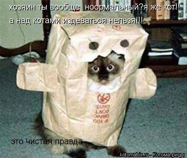 Котоматрица: хозяин ты вообще  ноормальный?я же кот!! а над котами издеваться нельзя!!! это чистая правда