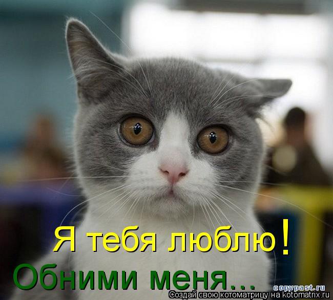 Котоматрица: Я тебя люблю ! Обними меня...