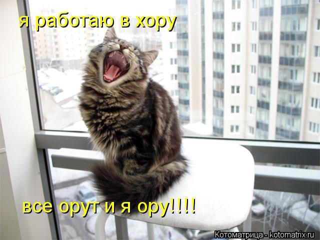 Котоматрица: я работаю в хору  все орут и я ору!!!!