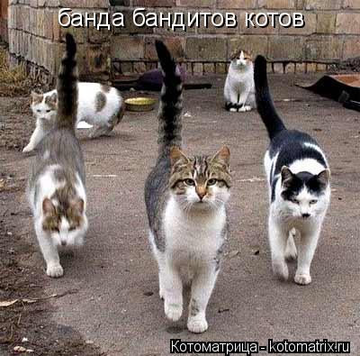 Котоматрица: банда бандитов котов