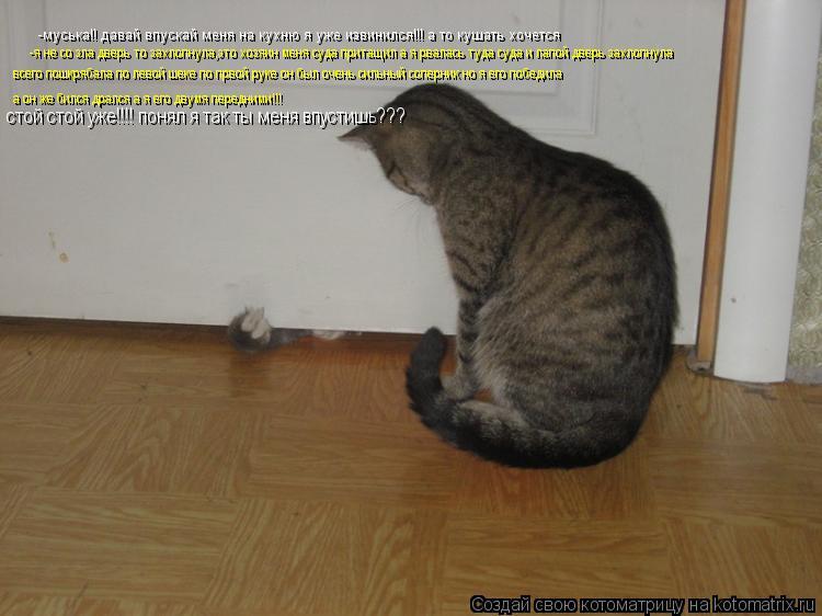 Котоматрица: -муська!! давай впускай меня на кухню я уже извинился!!! а то кушать хочется -я не со зла дверь то захлопнула,это хозяин меня суда притащил а я
