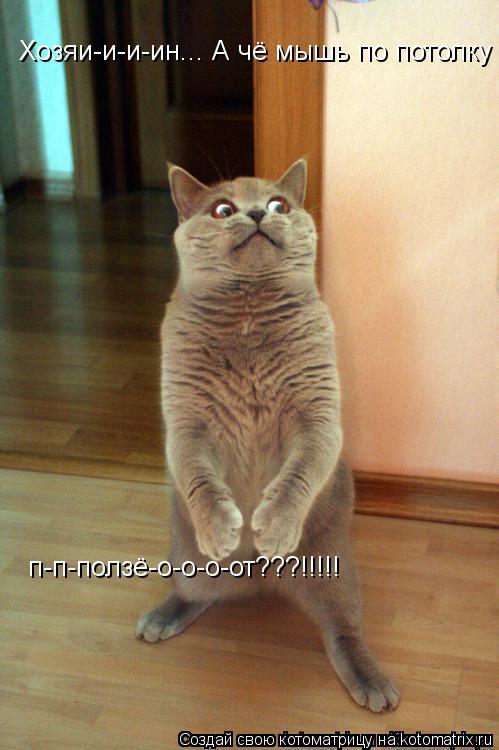 Котоматрица: Хозяи-и-и-ин... А чё мышь по потолку  п-п-ползё-о-о-о-от???!!!!!
