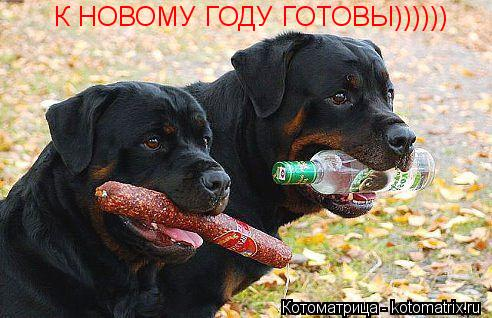 Котоматрица: К НОВОМУ ГОДУ ГОТОВЫ))))))