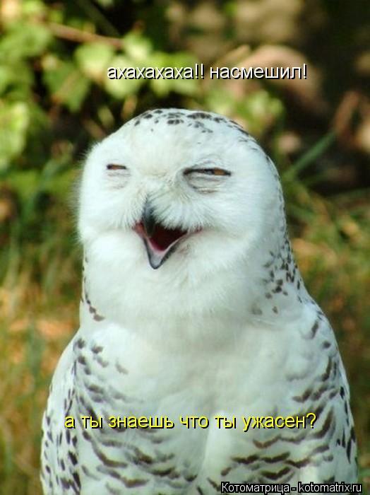 Котоматрица: ахахахаха!! а ты знаешь что ты ужасен? насмешил!