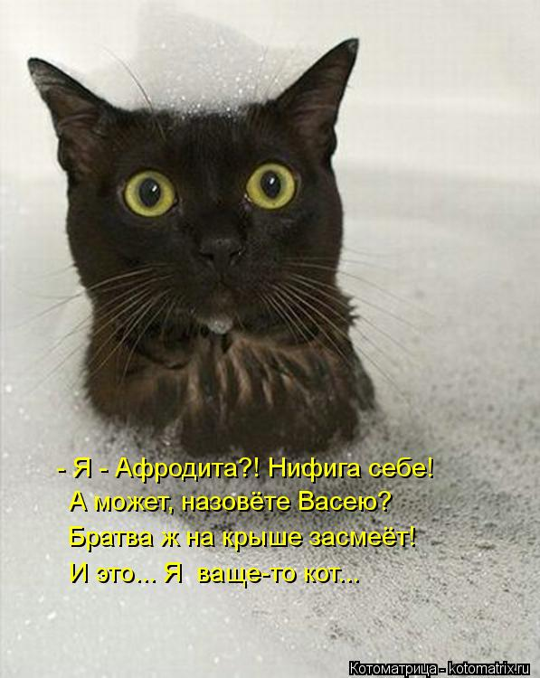 Котоматрица: - Я - Афродита?! Нифига себе! А может, назовёте Васею?  Братва ж на крыше засмеёт! И это... Я  ваще-то кот...