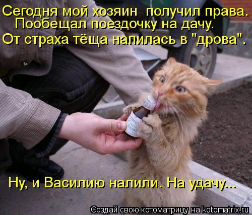 """Котоматрица: Сегодня мой хозяин  получил права. Пообещал поездочку на дачу. От страха тёща напилась в """"дрова"""". Ну, и Василию налили. На удачу..."""