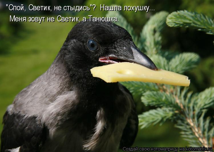 """Котоматрица: """"Спой, Светик, не стыдись""""?  Нашла лохушку... Меня зовут не Светик, а Танюшка."""