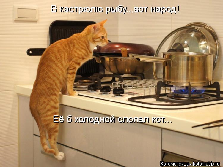 Котоматрица: В кастрюлю рыбу...вот народ! Её б холодной слопал кот...