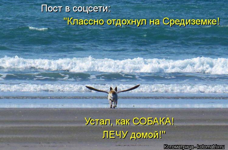 """Котоматрица: Пост в соцсети: """"Классно отдохнул на Средиземке! Устал, как СОБАКА! ЛЕЧУ домой!"""""""