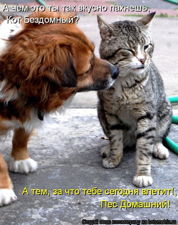 Котоматрица: А чем это ты так вкусно пахнешь, Кот Бездомный? А тем, за что тебе сегодня влетит!, Пес Домашний!