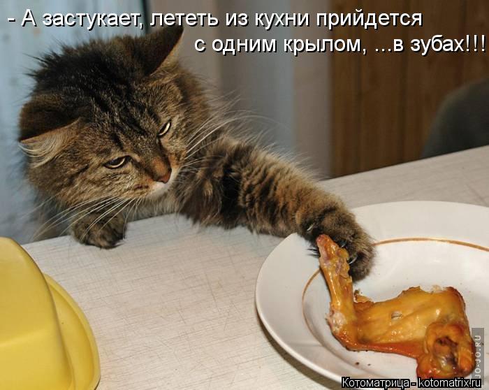 Котоматрица: - А застукает, лететь из кухни прийдется с одним крылом, ...в зубах!!!