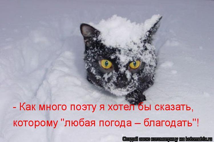 """Котоматрица: - Как много поэту я хотел бы сказать, которому """"любая погода – благодать""""!"""