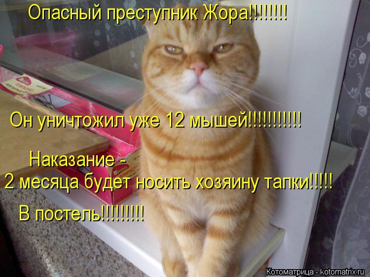 Котоматрица: Опасный преступник Жора!!!!!!!! Он уничтожил уже 12 мышей!!!!!!!!!!! Наказание - 2 месяца будет носить хозяину тапки!!!!! В постель!!!!!!!!!