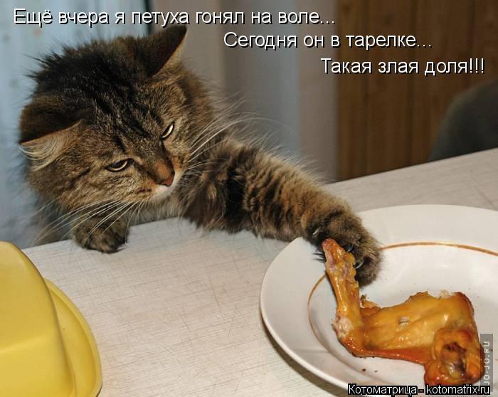 Котоматрица: Ещё вчера я петуха гонял на воле... Сегодня он в тарелке... Такая злая доля!!!