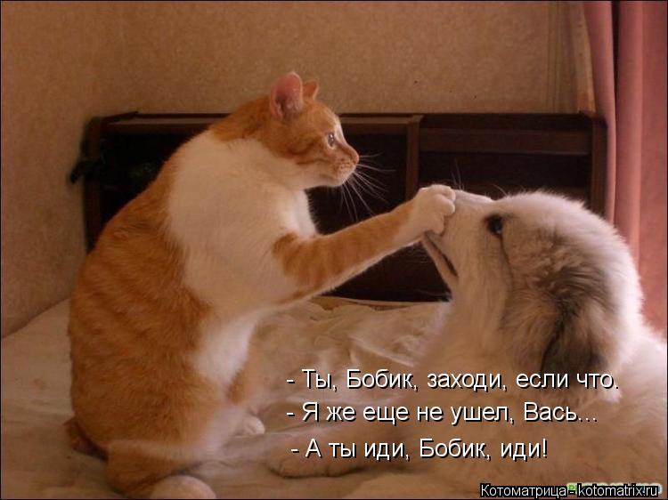Котоматрица: - Ты, Бобик, заходи, если что. - Я же еще не ушел, Вась... - А ты иди, Бобик, иди!