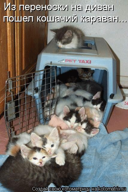 Котоматрица: пошел кошачий караван... Из переноски на диван