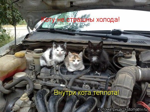 Котоматрица: Коту не страшны холода! Внутри кота теплота!
