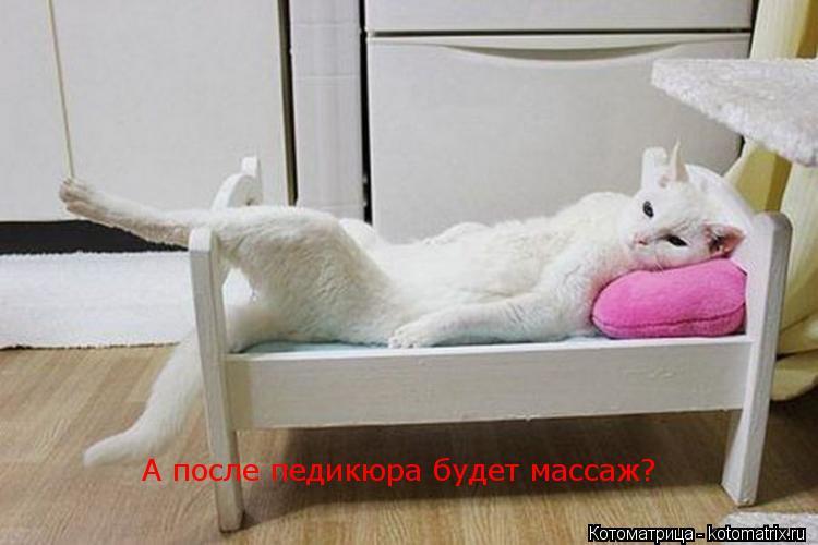 Котоматрица: А после педикюра будет массаж?