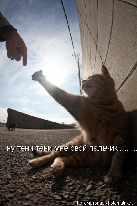 Котоматрица: ну тени тени мне свой пальчик ........откушу раз голодать заставляет е