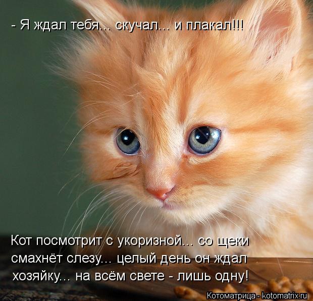 Котоматрица: - Я ждал тебя... скучал... и плакал!!! Кот посмотрит с укоризной... со щеки смахнёт слезу... целый день он ждал  хозяйку... на всём свете - лишь одну!