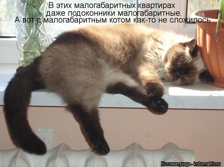 Котоматрица: В этих малогабаритных квартирах даже подоконники малогабаритные. А вот с малогабаритным котом как-то не сложилось...