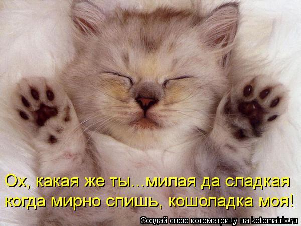 Котоматрица: Ох, какая же ты...милая да сладкая когда мирно спишь, кошоладка моя!