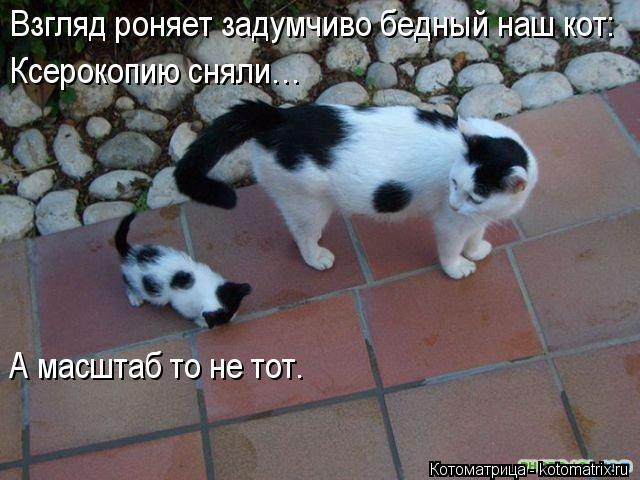 Котоматрица: Взгляд роняет задумчиво бедный наш кот: Ксерокопию сняли… А масштаб то не тот.