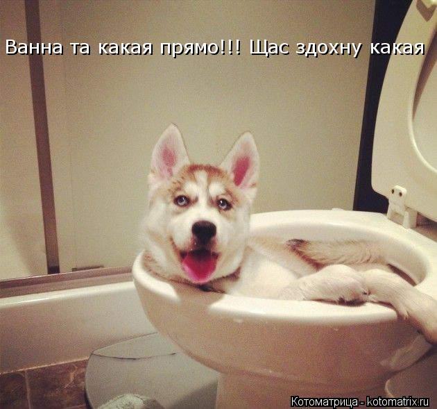 Котоматрица: Ванна та какая прямо!!! Щас здохну какая                          Ванна та какая прямо!!! Щас здохну какая