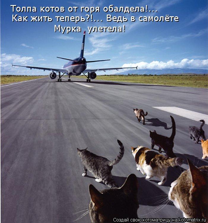 Котоматрица: Толпа котов от горя обалдела!... Как жить теперь?!... Ведь в самолёте Мурка  улетела!