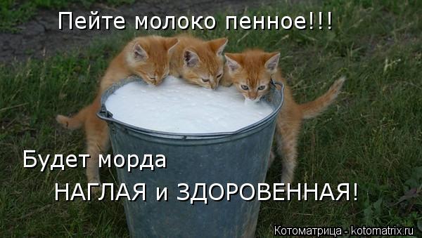Котоматрица: Пейте молоко пенное!!! Будет морда  НАГЛАЯ и ЗДОРОВЕННАЯ!