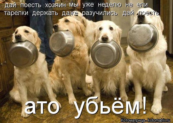 Котоматрица: дай  поесть  хозяин мы  уже  неделю  не  ели   тарелки  держать  даже  разучились   дай  поесть   ато  убьём!