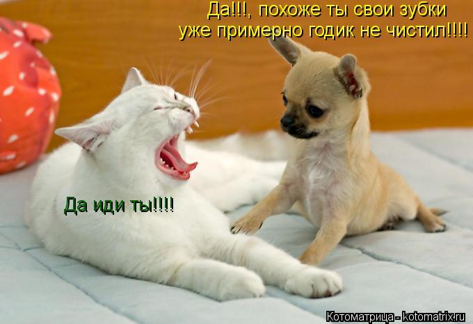 Котоматрица: Да!!!, похоже ты свои зубки уже примерно годик не чистил!!!! Да иди ты!!!!