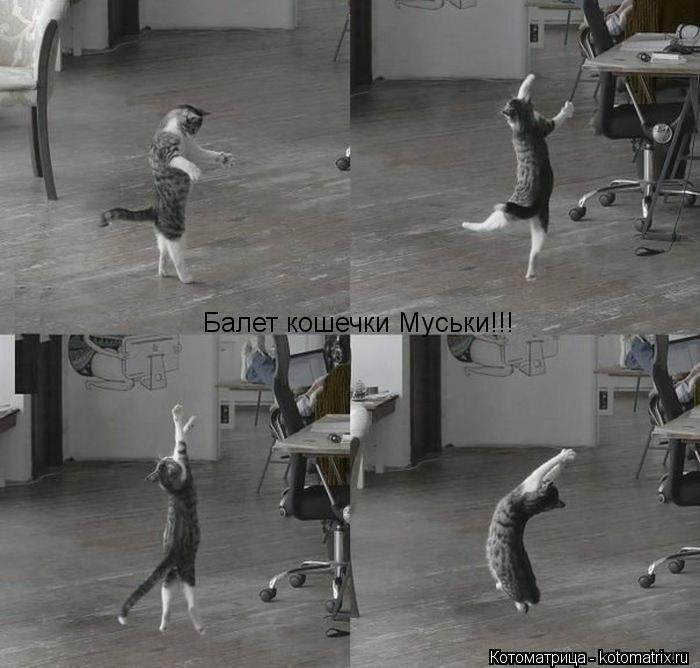 Котоматрица: Балет кошечки Муськи!!!