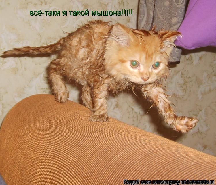 Котоматрица: всё-таки я такой мышона!!!!!