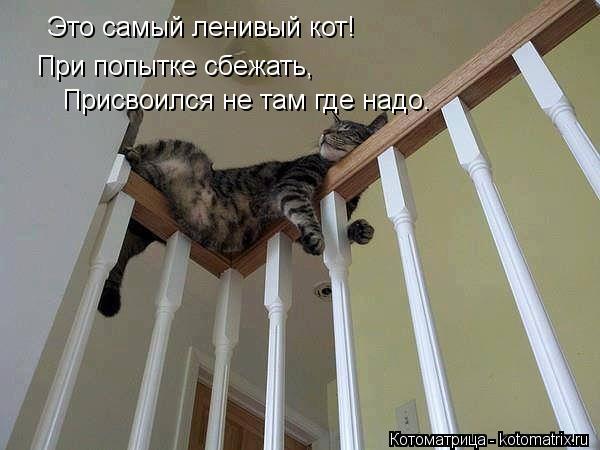 Котоматрица: Это самый ленивый кот! При попытке сбежать, Присвоился не там где надо.