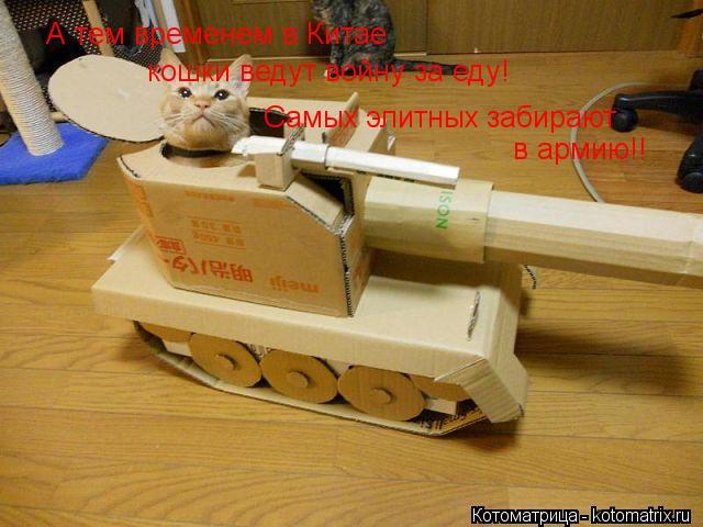 Котоматрица: А тем временем в Китае кошки ведут войну за еду! Самых элитных забирают в армию!!