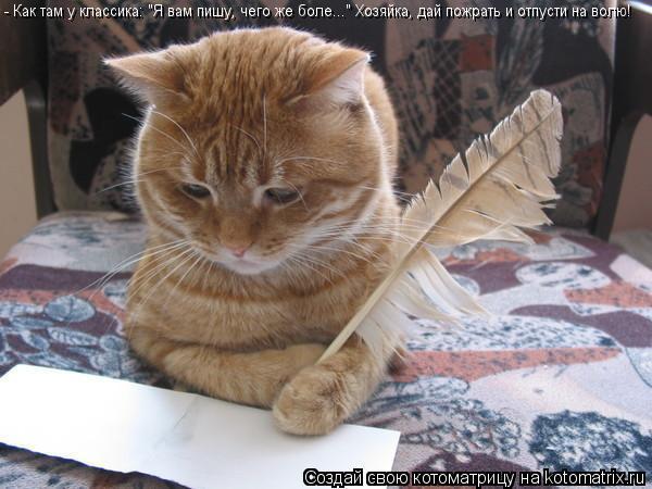 """Котоматрица: - Как там у классика: """"Я вам пишу, чего же боле..."""" Хозяйка, дай пожрать и отпусти на волю!"""