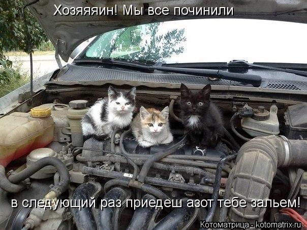 Котоматрица: Хозяяяин! Мы все починили  в следующий раз приедеш азот тебе зальем!